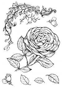 A4 Transzfer papír – 2 ív A4 Rózsa és pillangók DFTR038